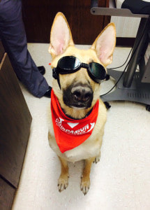 laser therapy for your dog