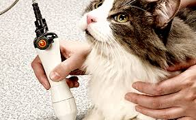 laser therapy for your cat